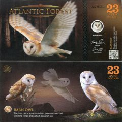 atlantic-forest23-16